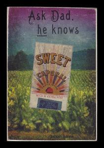 Picture, Helmar Brewing, Helmar Oasis Card # 236, Pie TRAYNOR (HOF), Bat on shoulder, Pittsburgh Pirates
